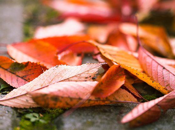 liście jesienną porą